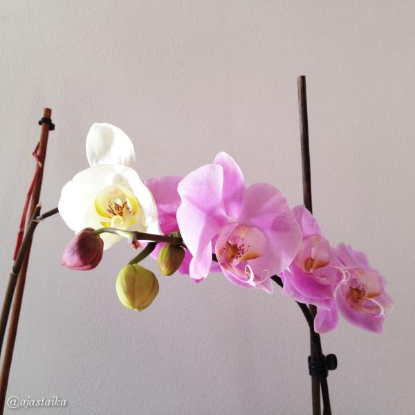 Keittiössä kukkii tuplasti. #flower #orchid #kitchen #pitkäjänteisyys #odotuspalkitaan