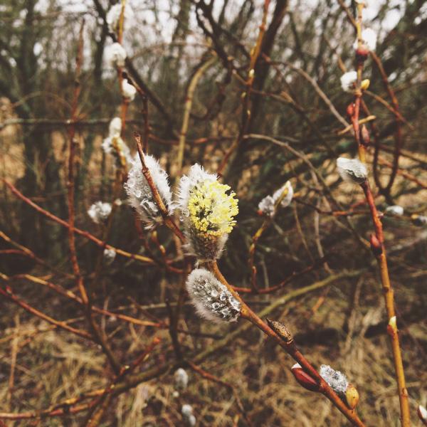 Day 6: A taste of spring