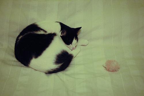 Pate nukkuu