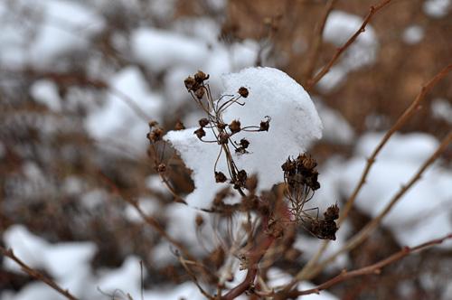 Talvi tuli I