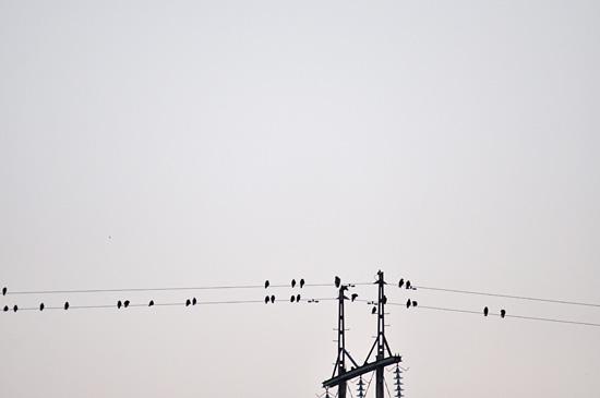 Linnut linjoilla