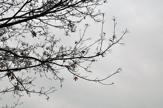 Harmaa taivas