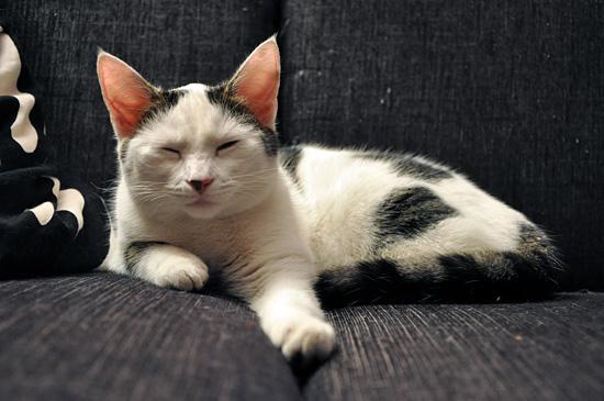 Nannaa väsytti