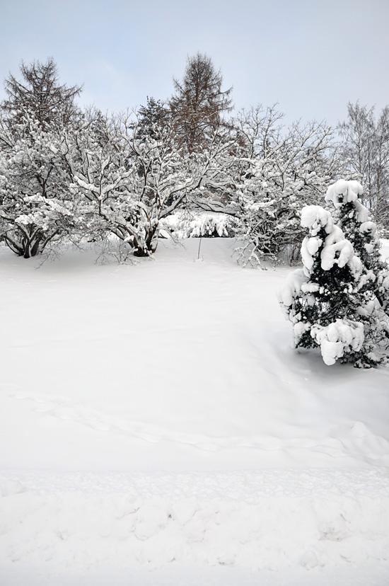 Luminen harju