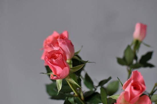 Naistenpäivän ruusut