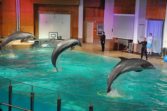 Delfiinihyppy