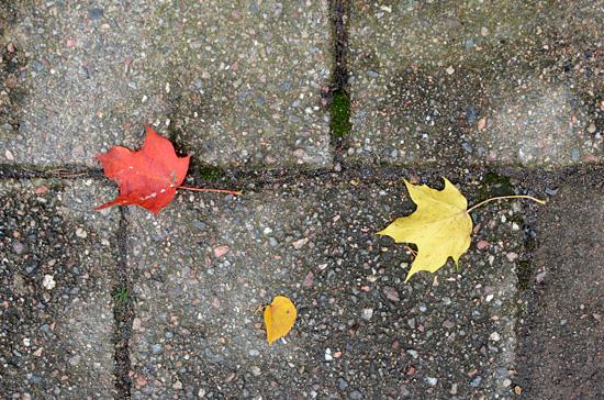 Lehdet putoo