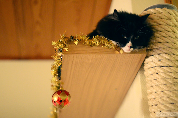 Wäinölläkin on joulu