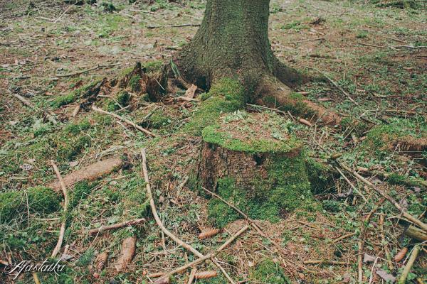 Metsässä I