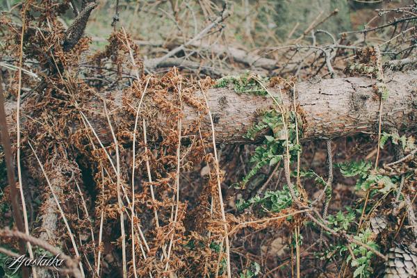 Metsässä II