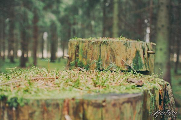 Metsässä IV