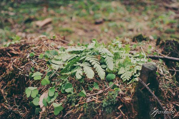 Metsässä V