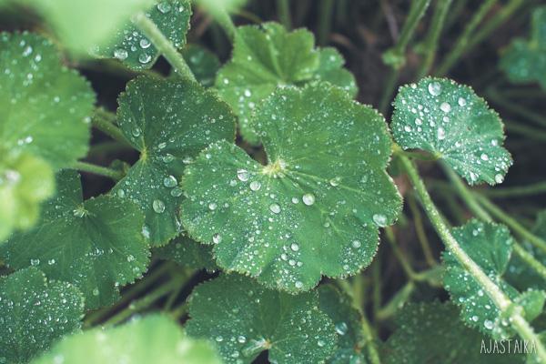 Muisto sateesta
