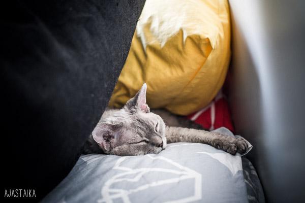 Nukkumakolo