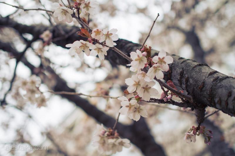 Kerttulinkadun kukkaloisto I
