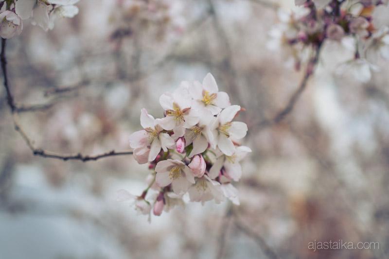 Kerttulinkadun kukkaloisto II