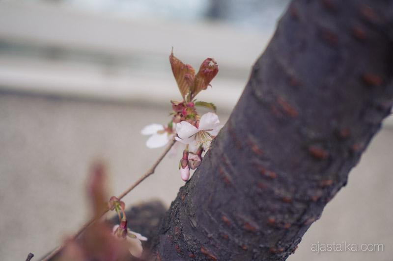Kerttulinkadun kukkaloisto III