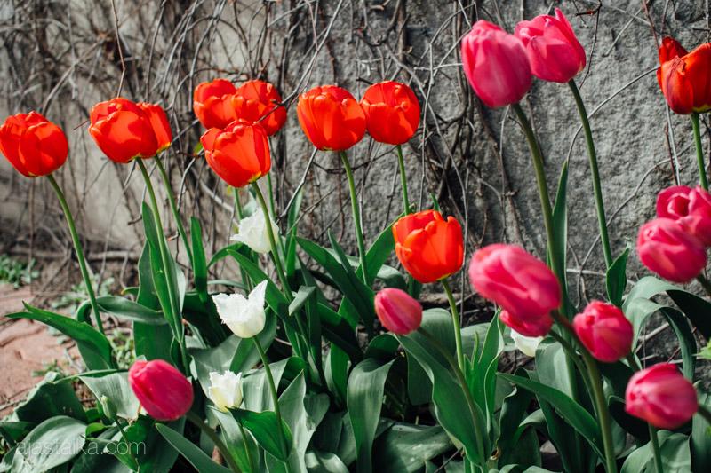 Se on kevät II