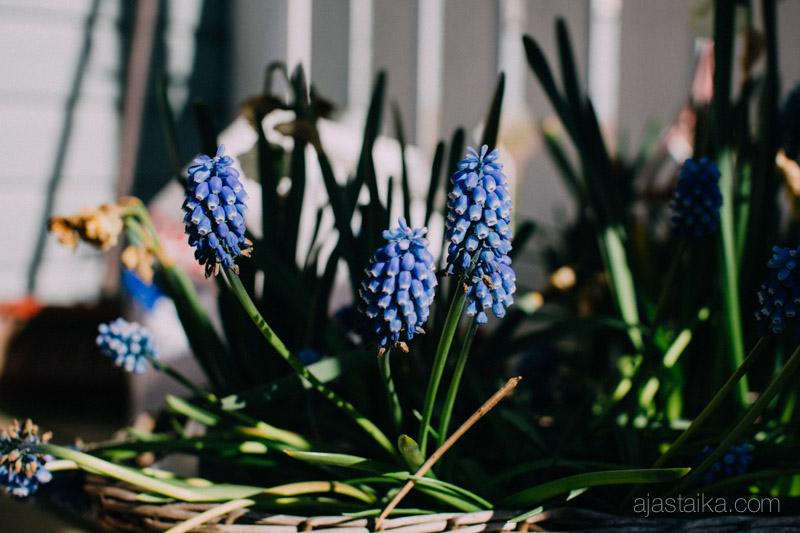 Terassilla kukkii