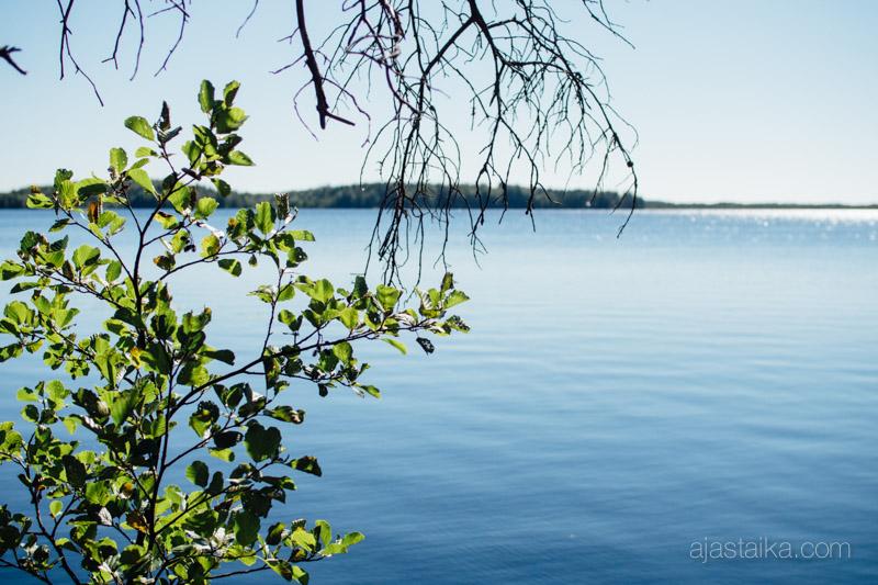 Savojärvi