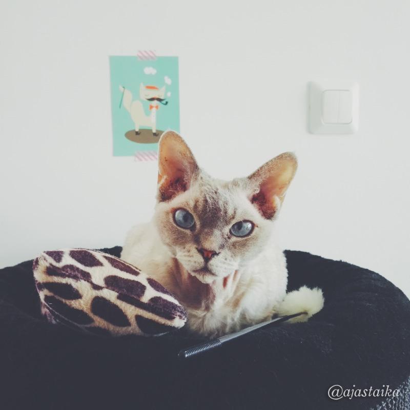 Kevät-Barbi ? #barbithecat #cat #devonrex #toys #pömpeli #vscocam